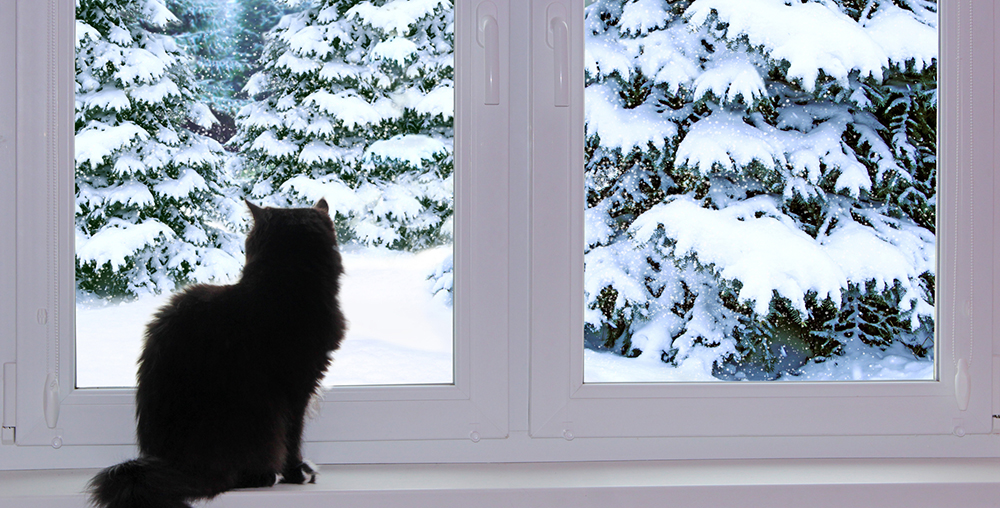 black cat looking out window behind which snowy winter snow fell outside window